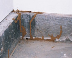 Termites in Buford, GA